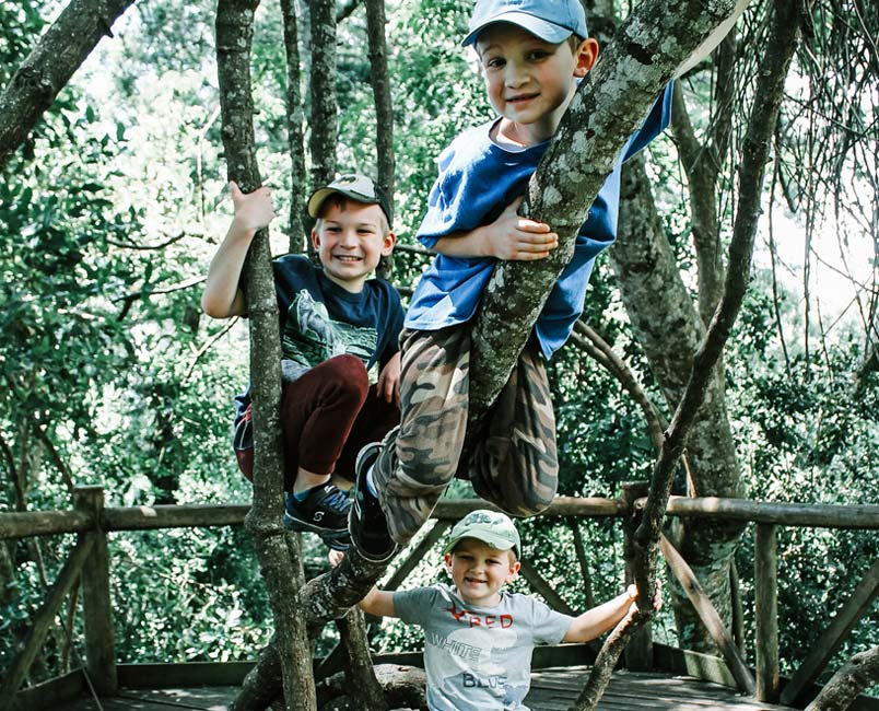 Three boys climbing a tree and smiling.